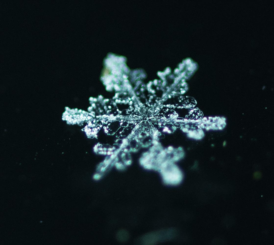 snow flake, Ilze Lucero