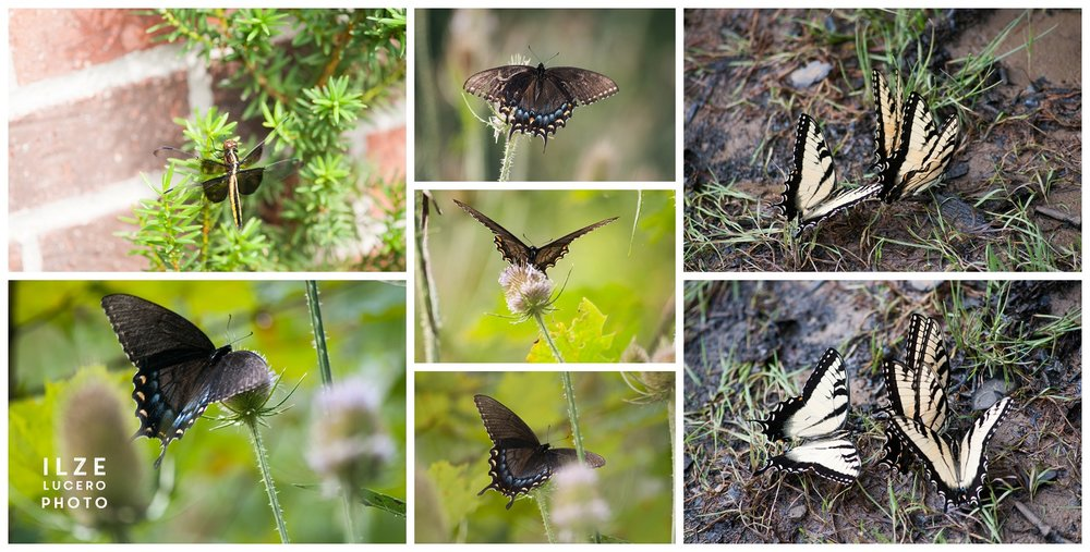 Free Butterfly Photos