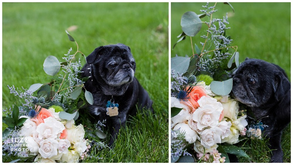 Pug and wedding bouquet
