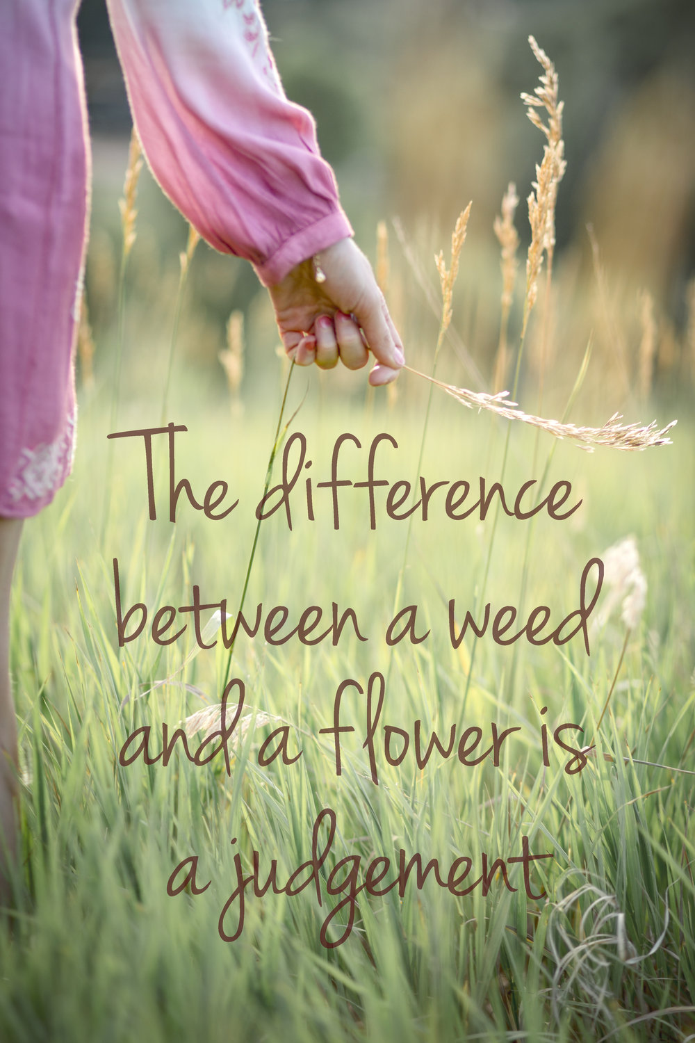 the difference between a weed and a flower is a judgement