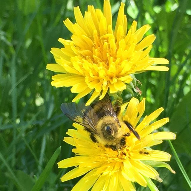 Busy (making plans for the weekend!) 🐝 💛 #busybee #washingtonisland #doorcounty