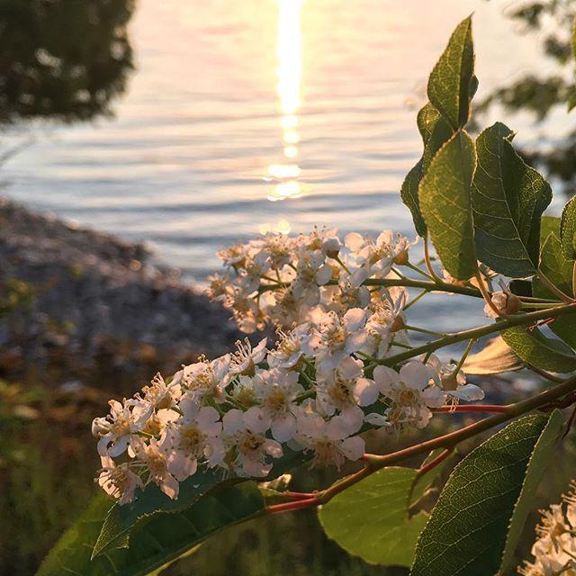 Early morning reflections 🌞 #washingtonisland #doorcounty #islandlife #wakingup