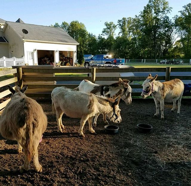 In case any of you thought we were joking about having 4 live donkeys at our Cinco de Mayo Grand Opening Party, we'd like you to meet Gloria, GG, Misty and Polly.
