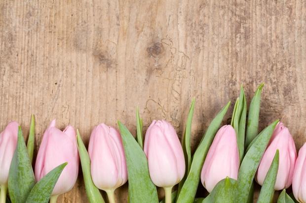 rosafarbene Tulpen auf altem Holzhintergrund,