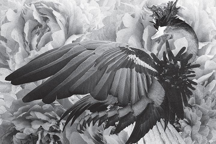 mujuice-metamorphosis-2014-10