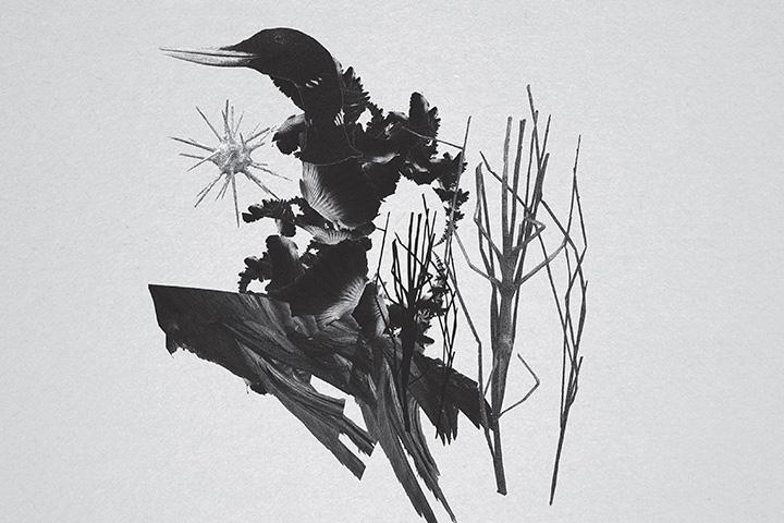 mujuice-metamorphosis-2014-11