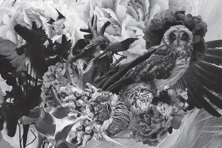 mujuice-metamorphosis-2014-12