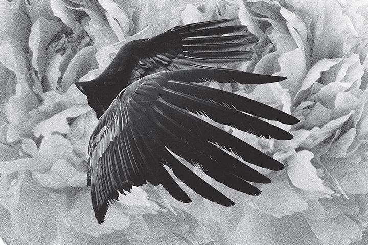 mujuice-metamorphosis-2014-5