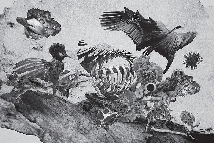 mujuice-metamorphosis-2014-6