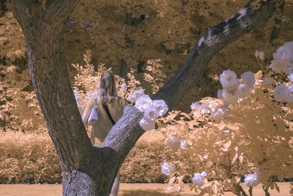 infrared-gmunk2.jpg