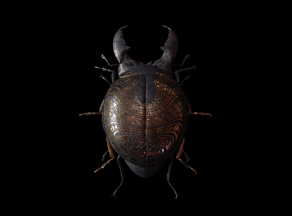 engraved-entomology8.jpg