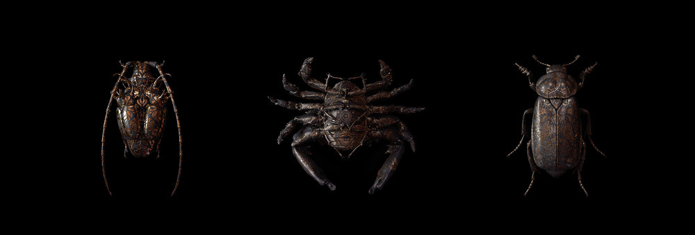 engraved-entomology7.jpg