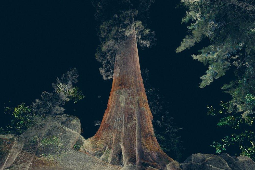 treehugger8.jpg
