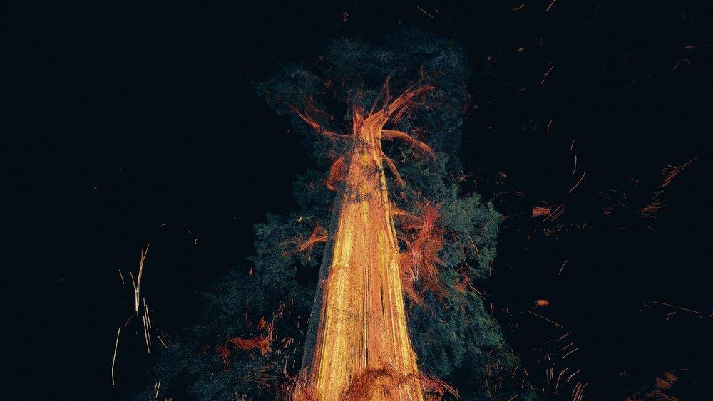 treehugger5.jpg