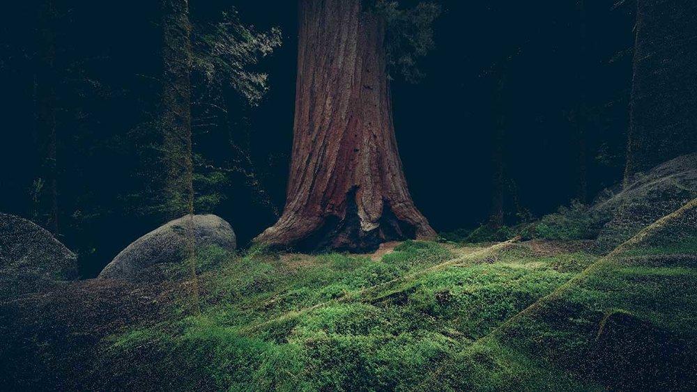 treehugger4.jpg