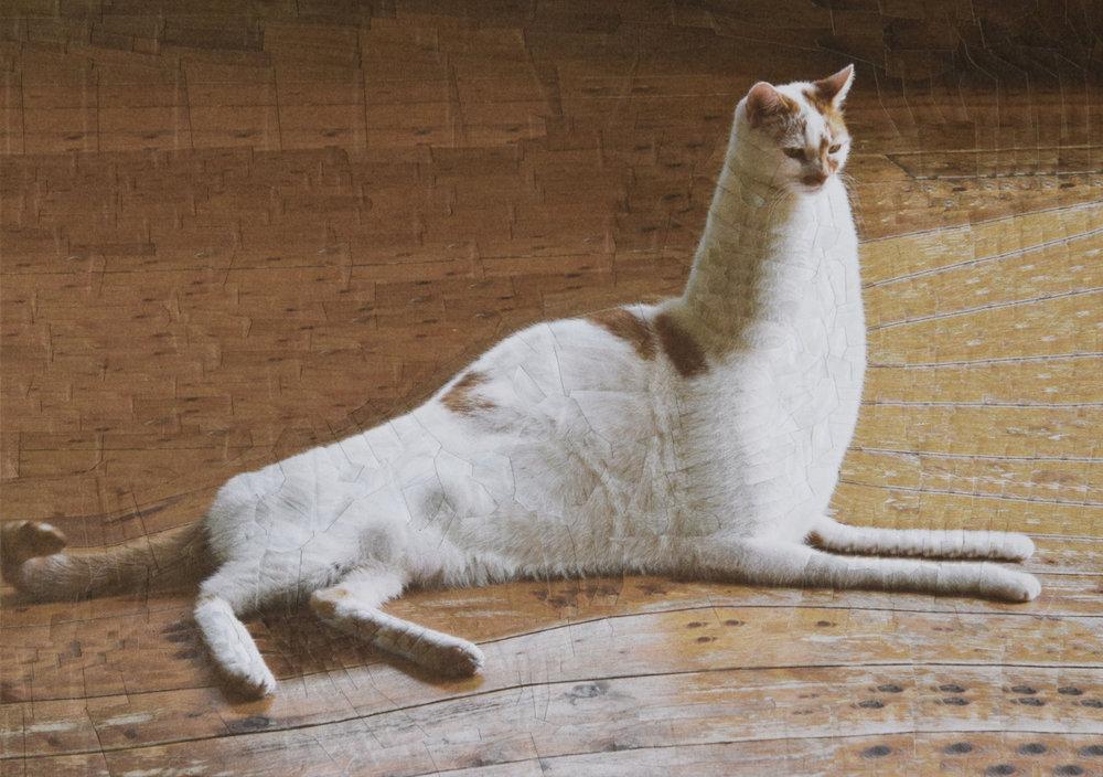 catsdogs92.jpg
