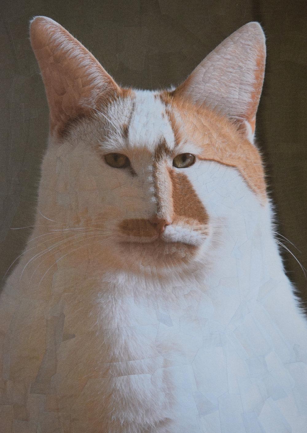 catsdogs9.jpg