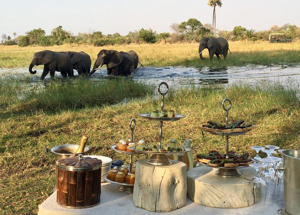 Afternoon tea with the elephants of Abu Camp, Okavango Delta, Botswana