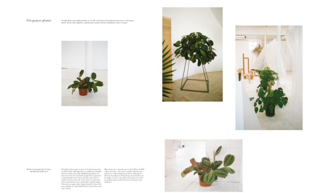 a feature on plant care from the Apiece Apart SS14 gazette