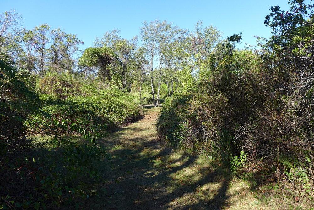 Floyd Bennett Field Backwoods