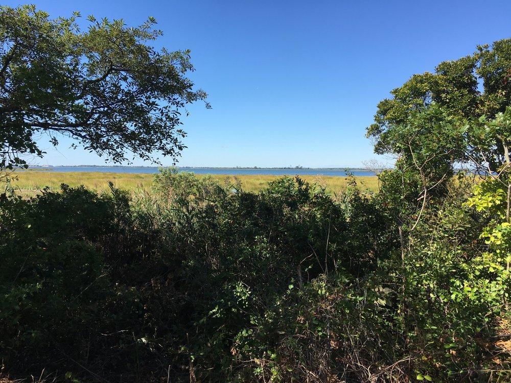 View to Manhattan From Jamaica Bay Wildlife Rescue