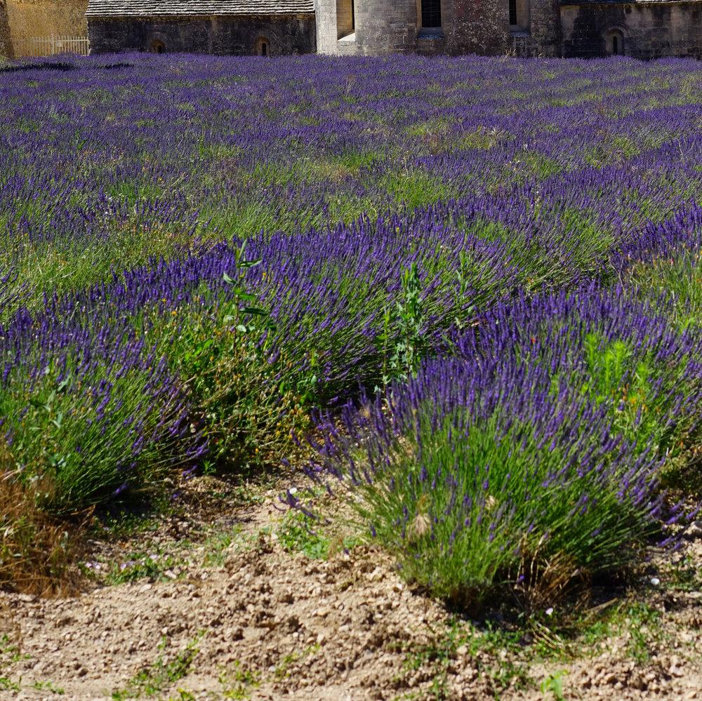 Monastery Garden Pixabay Cropped Twice.jpg
