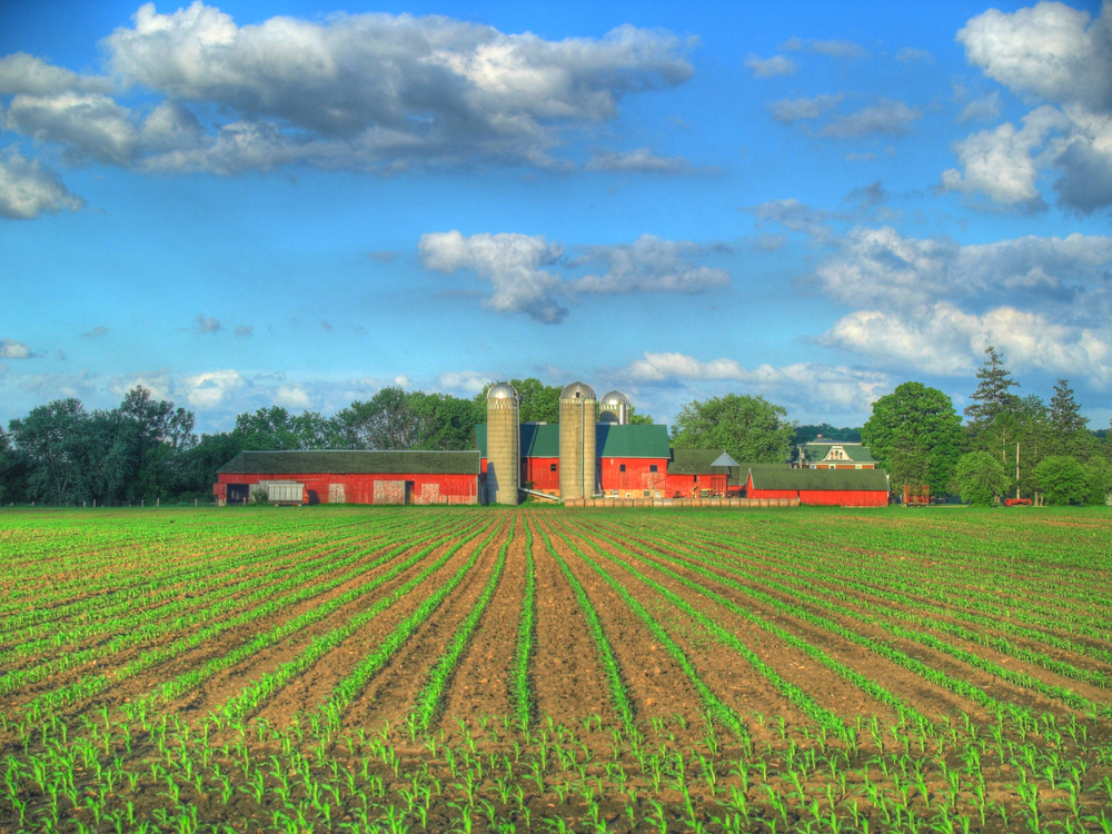 Organic, Sustainable or Conventional Farming