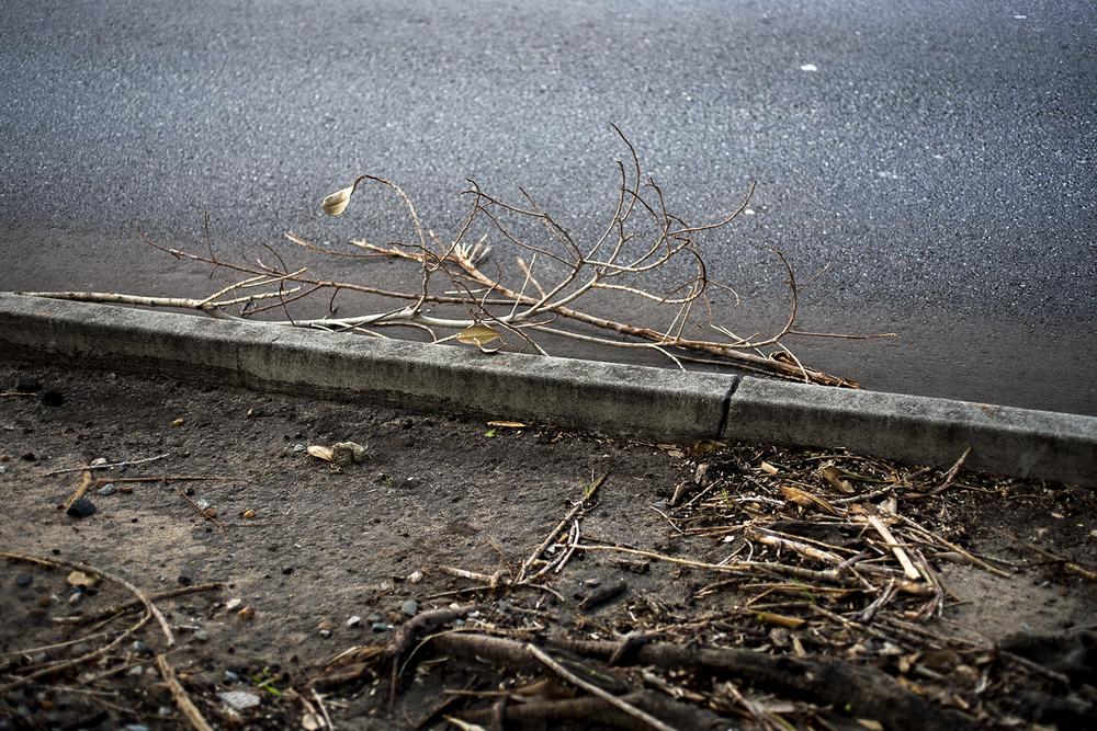 Asphalt Twig