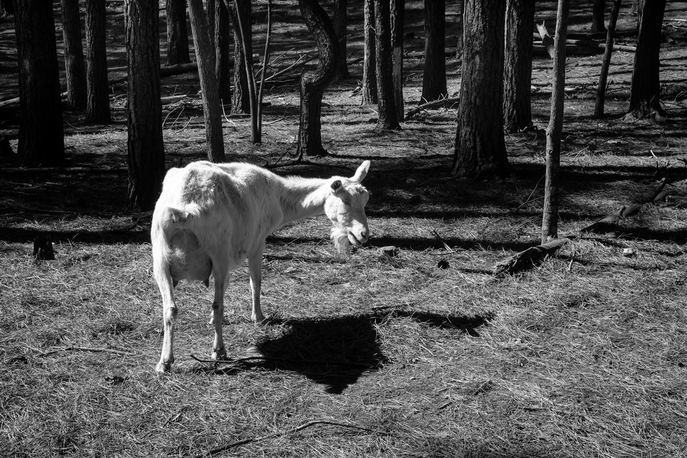 2017_GoatFarm-56.jpg