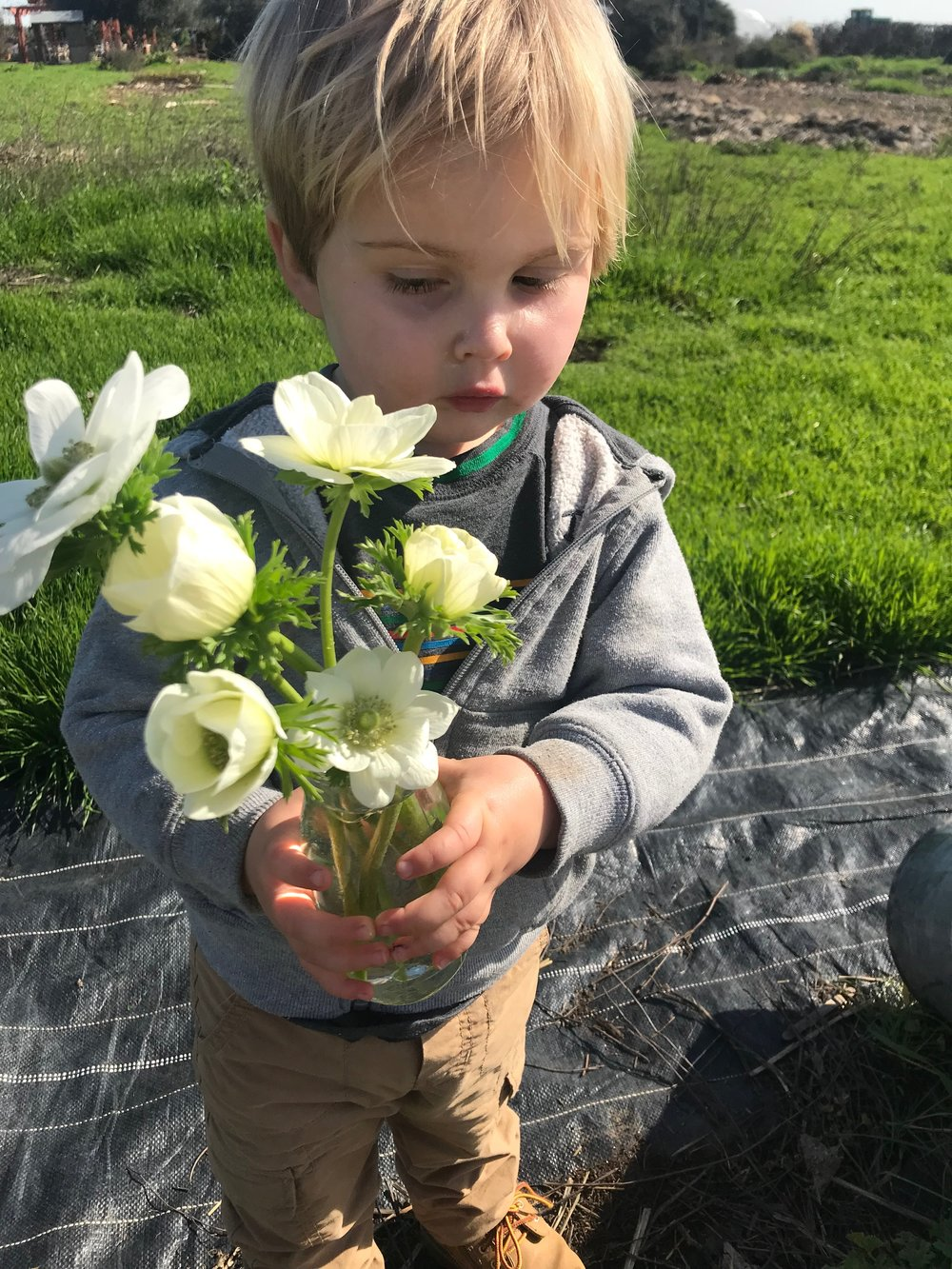 Nalin with the first anemones in January