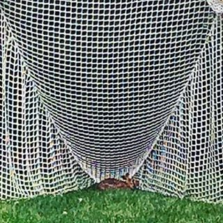 Nature issues #lacrosse #laxbomb