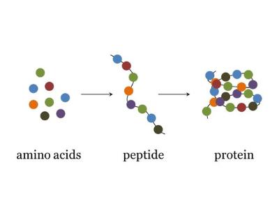 20-aminoácidos-esenciales.png