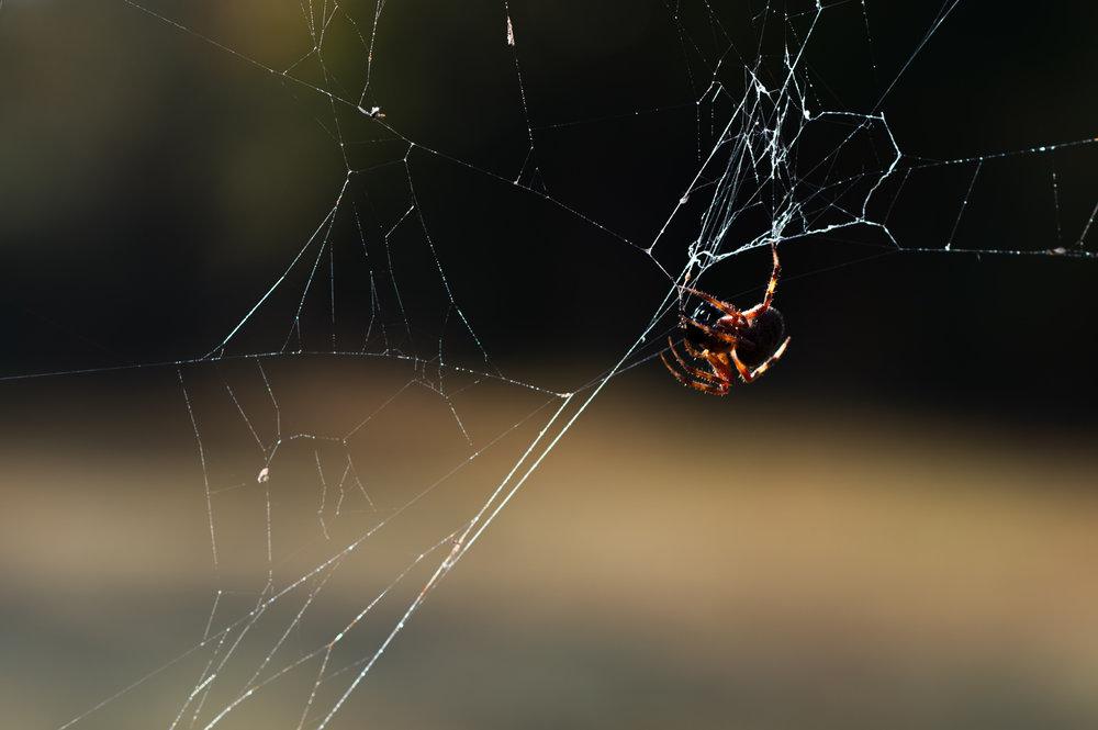 Hanging Spider.jpg
