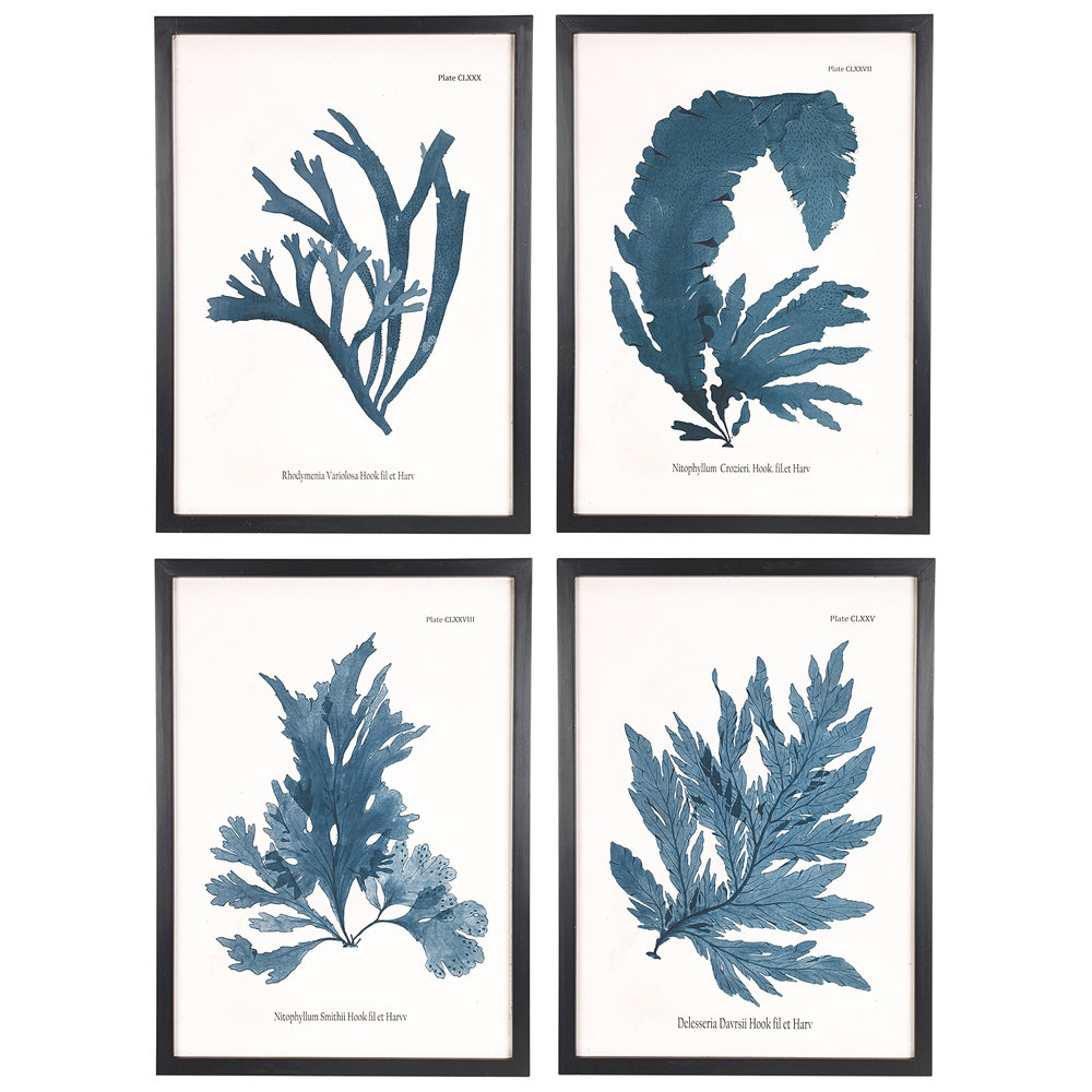 Credit: MiaFleur. Botanical Framed Prints (Set of 4). £308.  http://www.miafleur.com