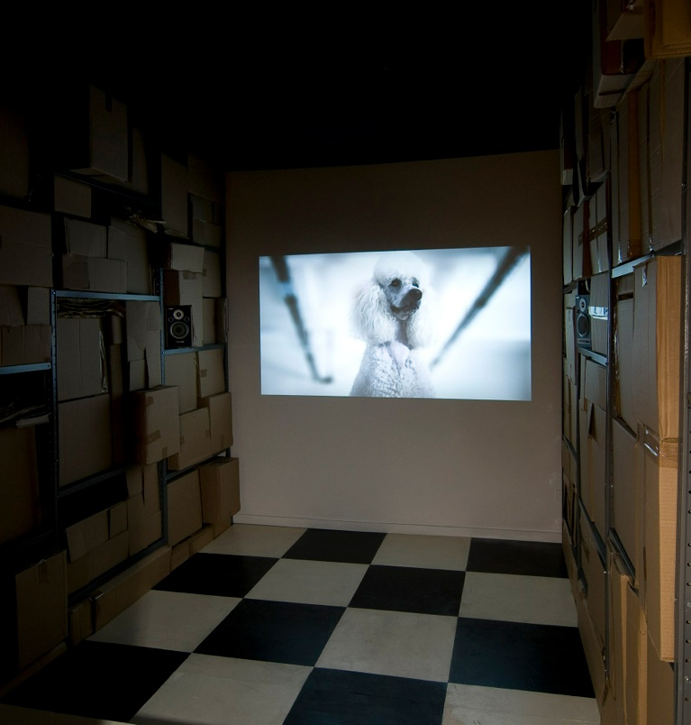 installation view, projection of the video Black and White Rule