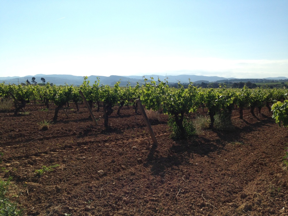 Giro del Gorner vineyards in Penedes