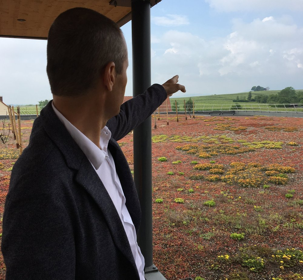 Georges Lorentz points out Grand Cru Alsace vineyards from the roof of Gustave Lorentz winery.