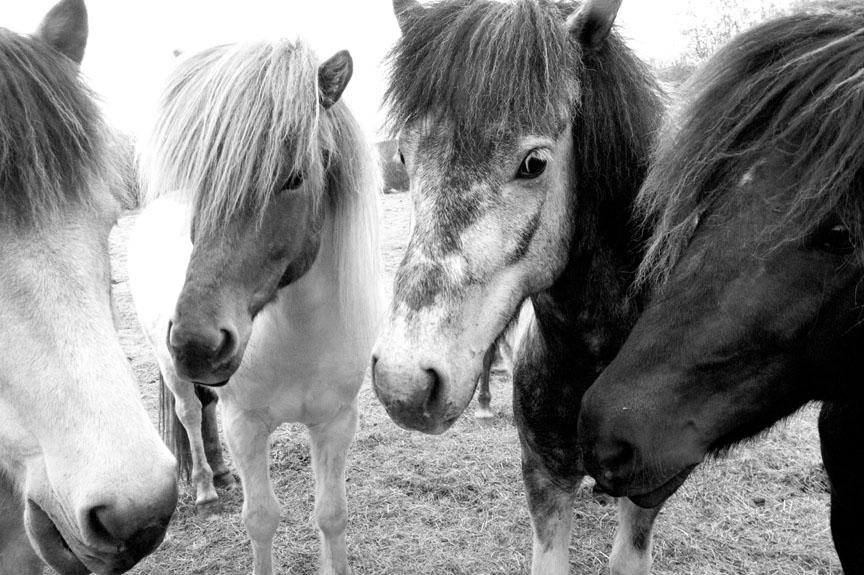 Horses_DSC3726_12x8.jpg
