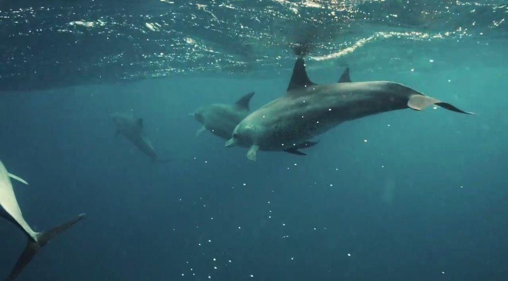 dolphin 4.JPG