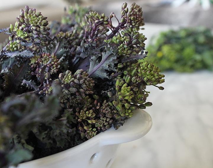 PlatedColor.com Quinoa and Raab Salad1