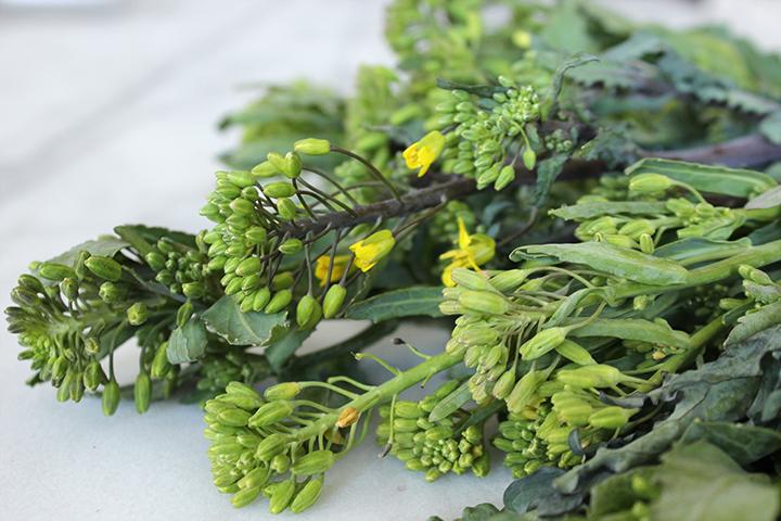PlatedColor.com Quinoa and Raab Salad2