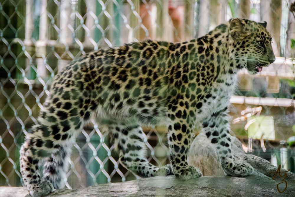 Jacksonville-Zoo-37.jpg