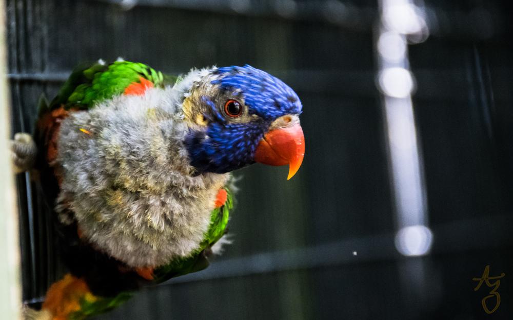 Jacksonville-Zoo-188-2.jpg