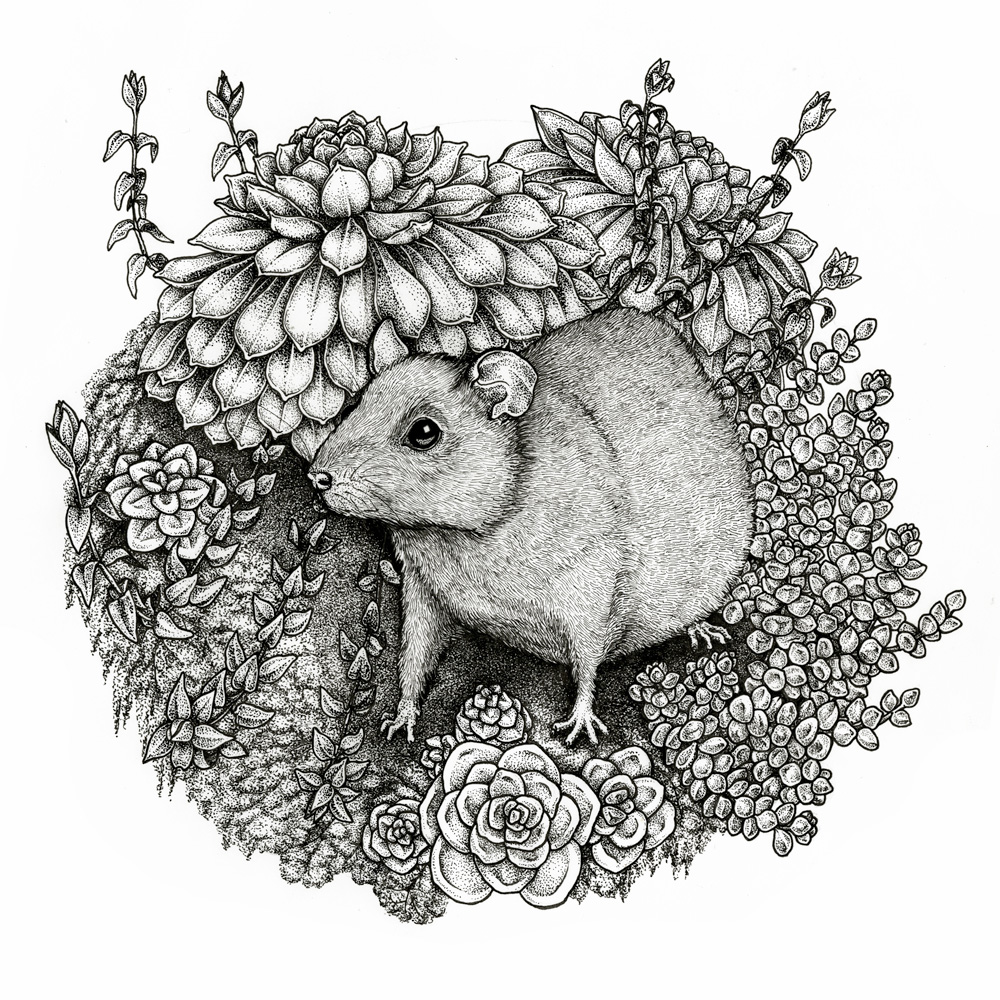 Rat and Succulents
