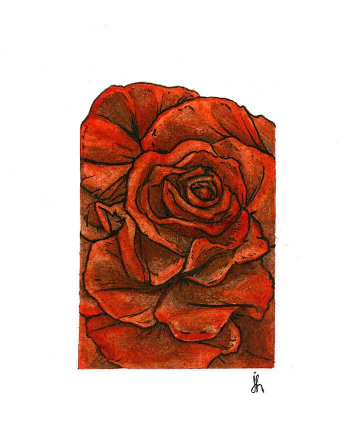 rose study #03