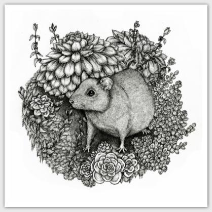square-postcard-rat-succulents.png