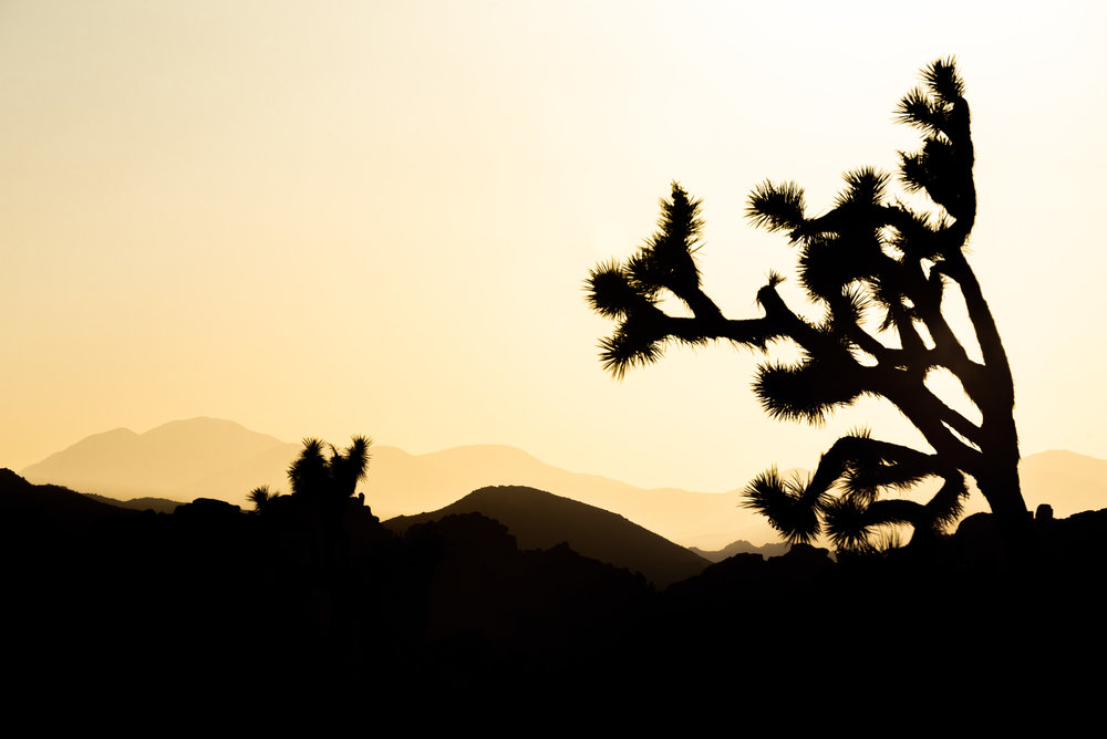 Joshua Tree - California