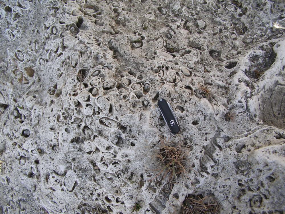 Cretaceous reef