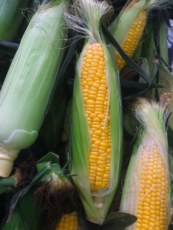 Phosphorus - Corn is a good source of this mineral that maintains healthy cell function and energy production, overall bone strength by optimizing calcium absorption, and the body's overall pH balance.