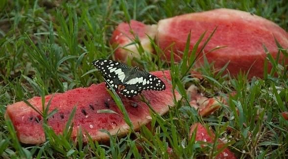butterfly-2331040_640.jpg
